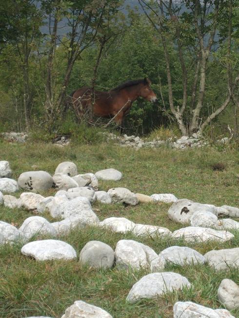 Kobila znatiželjno promatra