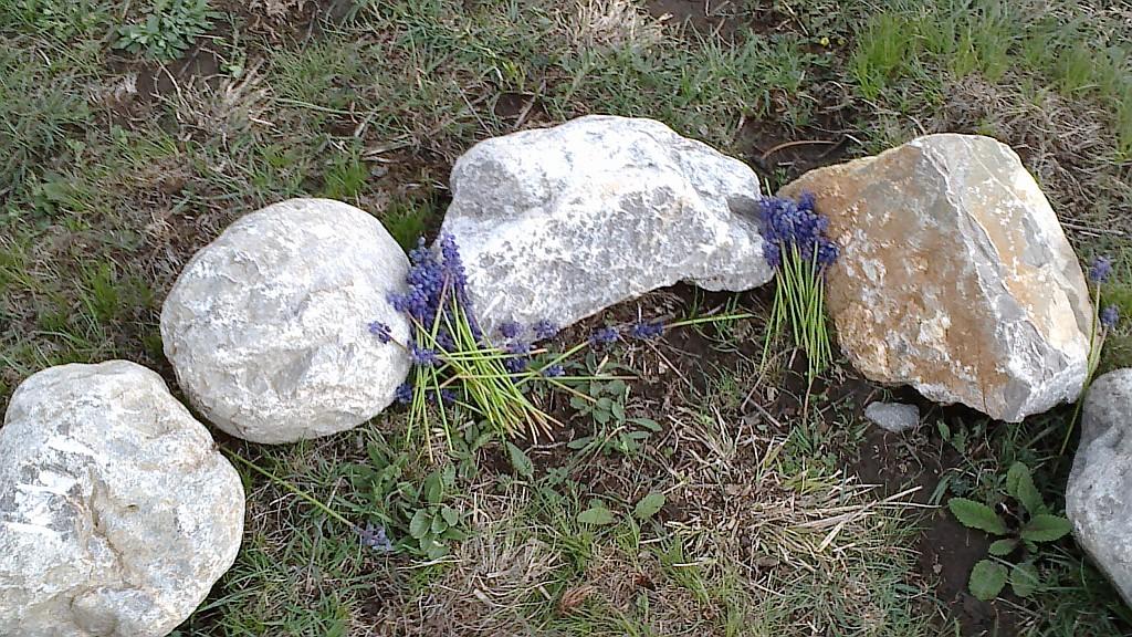Plavo cvijeće u središtu